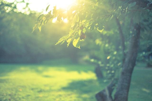 更年期うつを改善する生活習慣
